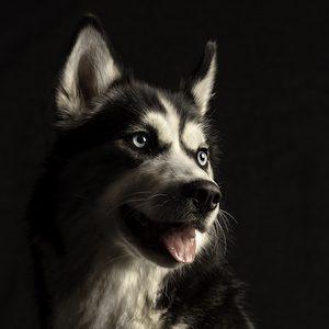 portret huisdier
